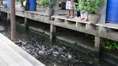 Feeding fish river front of the Nonthaburi temple Thailand. Stock Footage
