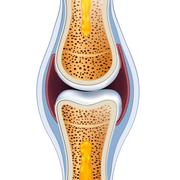 normal synovial joint anatomy - stock illustration