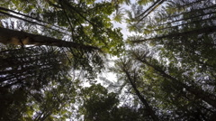 Forest Trees Time Lapse - stock footage