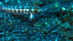 Close up on a colourful fish inhabitant the Andaman Sea. Andaman Islands, India. Stock Footage