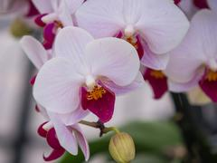 Pink and purple colored orchids - stock photo