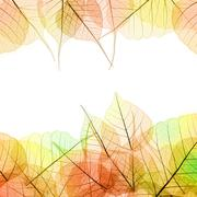 Frame of autumn color transparent leaves - isolated on white Stock Photos