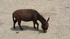 Walk the little donkey Stock Footage