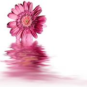 Stock Illustration of pink flower water reflection