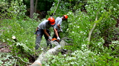 Forest workers using their power tools when cutting a tree into pieces Stock Footage