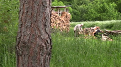 Countryman chop wood with an axe to the woodshed on summer day Stock Footage