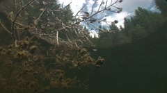 Stock Video Footage of Underwater tree below the surface of a lake landscape with the sky and pines