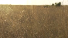 Field of yellowed grass-fart motion Stock Footage