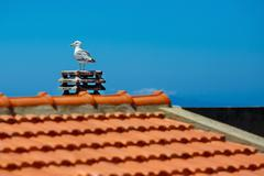 White sea gull sitting on stone roof Stock Photos