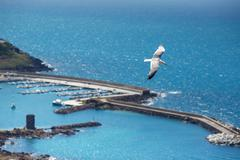 Sea gull at port of Castelsardo, Sardinia, Italy - stock photo