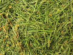 Stock Photo of Decay harvested grass in big green smell mound in corner of garden.