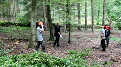 Forest workers working in the forest Stock Footage