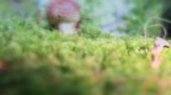 Red toadstol magic mushroom tilt up shot Stock Footage
