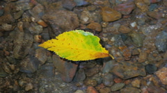 Single colorful leaf in stream flowing downstream slow motion - stock footage