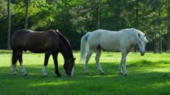 White Stallion 4k stock video clip Stock Footage