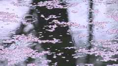 Cherry blossoms floating on water Stock Footage