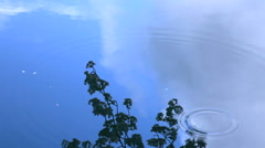Tree foliage reflected on water Stock Footage