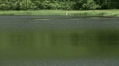 Kagamiike pond, Nagano Prefecture, Japan Stock Footage
