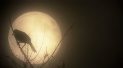 Raven silhouette against a blood moon Stock Footage