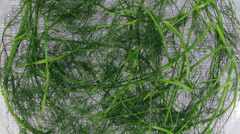 Time-lapse of drying dill spice Stock Footage