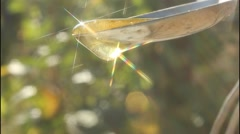 Drops of honey and spectra Stock Footage