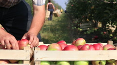 Cart full of apples after picking Stock Footage