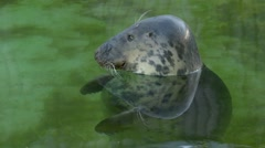 Grey seal Arkistovideo
