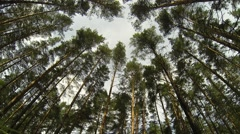 Looking Up To The Sky In Forest With Height Trees - stock footage