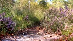 heather slider path - stock footage