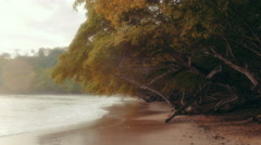 Establishing shot of an untamed tropical beach Stock Footage