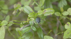 A blueberry plant with a fruit on it Stock Footage