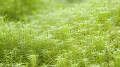 The greenish grass on the swamp Stock Footage