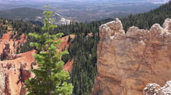 Bryce Canyon Utah pine tree view to valley 4K 159 Stock Footage