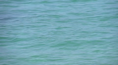 Sea Lions jumping around in the sea in slow motion Stock Footage