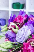 Violet and mauve  eustoma flowers Stock Photos