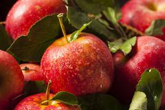 raw organic red gala apples - stock photo