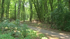 Cyclists passing on a winding bike path into deciduous forest Stock Footage