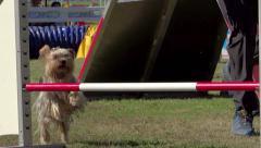 dog agility - stock footage