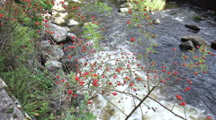 Small river in small German town Monschau. Stock Footage
