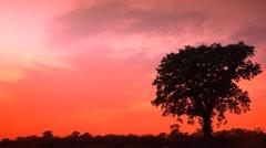 Clear Orange Sun Lit Sky Silhouette of Oak Tree Nature Background Stock Footage