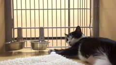 Cat in cage up for adoption at pet store Stock Footage