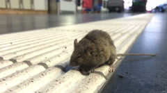 Mouse on ground at train terminal Stock Footage