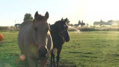 Horse Walks Up to Camera for a Close Up Stock Footage