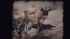 1953 Farm family, brick wall building Stock Footage