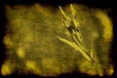 Sepia plant background Stock Illustration