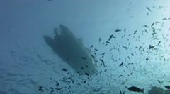 Divers Entering the water, shot from below Stock Footage