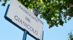 Bird resting on a road sign in Rome city center: Gianicolo, touristic point Stock Footage