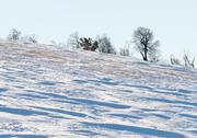 Stock Photo of winter trees snow