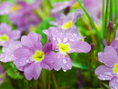 Stock Photo of flowers dew background