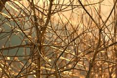 tree branches sunlight - stock photo